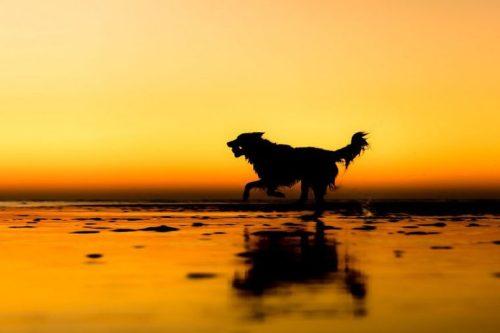 fotógrafo-de-cães-do-ano-apresenta-os-vencedores-de-várias-categorias-7-760x507
